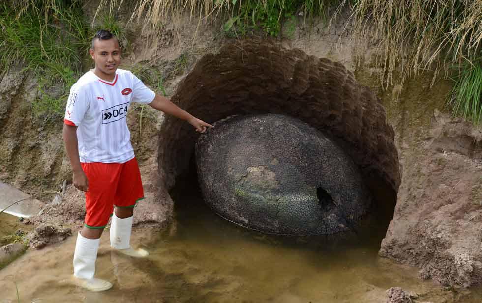 Descubren caparazón gigante en Argentina