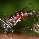 Invasión del zika en América comenzó en 2013: Estudio