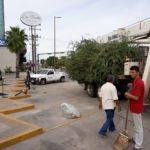 Lamenta Alcaldesa Celida López tala no autorizada de árboles en Hermosillo.